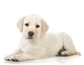 Acheter un chiot - Animalerie a paris chien ...